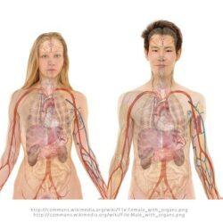 Ciało i zdrowie człowieka