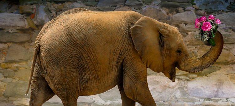 A gdyby przed twoim domem nagle pojawił się słoń?