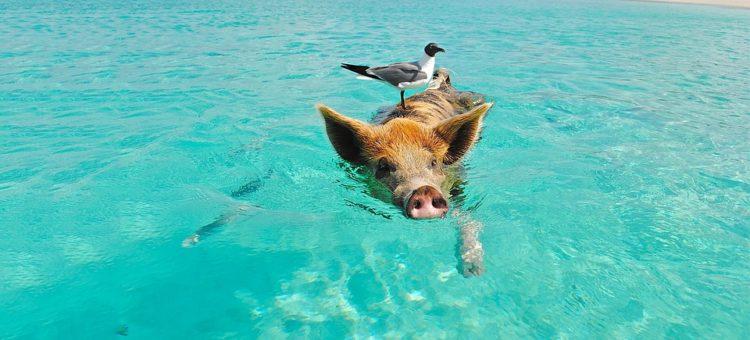 Podróż na wyspę szczęśliwą