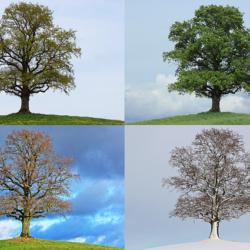 Jesień, zima, wiosna, lato